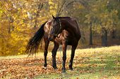 Beautiful brown horse in pasture