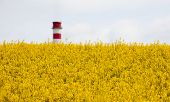 Rapeseed Field And Chimmey