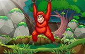 Orangutan hanging in the forest