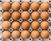 Eggs On Cardboard