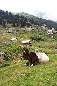 Plateau on Kackar Montains in Turkey