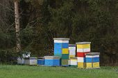 Beehives in the forest