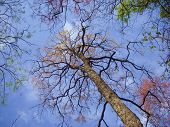 looking up at bright autumnal tree in a forest