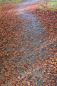 Autumn falls.