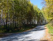 The Road In The Autumn Wood