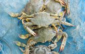 foto of blue crab  - Raw blue crab on the blue net fisherman - JPG