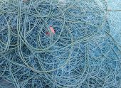 foto of blue crab  - fisherman blue net catch crab and fish in sea - JPG