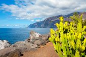 picture of cliffs  - Cactus and Los Gigantes cliffs - JPG