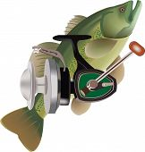 stock photo of bass fish  - black bass fish bass fisherman and coveted for competitive sports - JPG