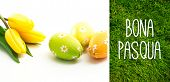 pic of pasqua  - Bona pasqua against grass background - JPG