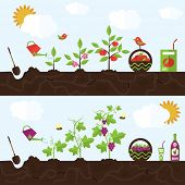 stock photo of planting trees  - Vector garden illustration in flat style - JPG