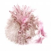 foto of insults  - Abstract light pink - JPG