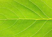 textura de folha