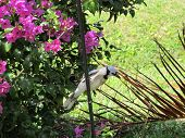 Blue Jay on a Birdfeeder Pole