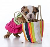 cute puppy with paws inside a big purse full of kibble poster