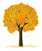 vector silhouette of autumn season yellow tree isolated on the white background