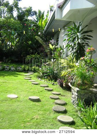 Picture or photo of olympus digital camera philippine for Philippine garden plants