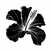 Hawaiian Hibiscus Laser Cut Vector Silhouette. Fragrance Flower. Mallow Chenese Rose. Black And Whit poster