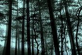 Mystery Mist In Forest
