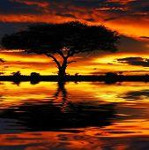Tree silhouette and dramatic sunset. Africa. Kenya. Masai Mara.