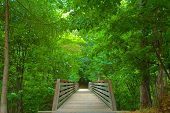 Rustic Bridge In The Woods