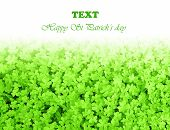 Green clover holiday border, st.Patrick's day decoration isolated on white background with text spac