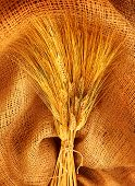 Wheat bouquet over canvas fabric, studio shot, fruitful harvest concept