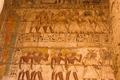 Egyptian Hieroglyphs And Drawings On The Walls And Columns. Egyptian Language, The Life Of Ancient G poster