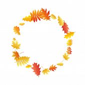 Oak, Maple, Wild Ash Rowan Leaves Vector, Autumn Foliage On White Background. Red Gold Yellow Oak Dr poster