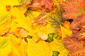 Beautiful yellow leaves background