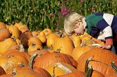 Choosing The Perfect Pumpkin