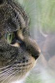 Rosto de gato