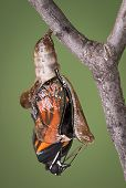 RV chrysalis