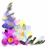 Greeting background with freesia flowers