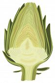 Halved artichoke isolated vector illustration