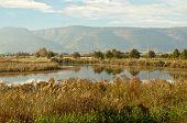 Landscape Of The Upper Galilee.  Israel.