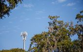 Cell Phone Tower Past Spanish Moss