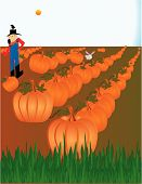 Pumpkin Patch Illustration