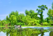 stock photo of cottonwood  - Atchafalaya River Basin with Cypress trees and boaters - JPG