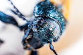 Scary Beetle
