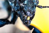 Beetle Jaws