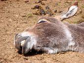 Taking A Nap In The Sun