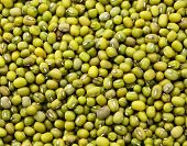 image of mung beans  - Mung green bean - JPG