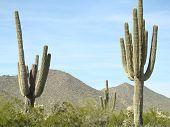 Two Saguaros With Arizona Mountains