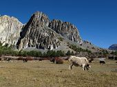 foto of yaks  - Yaks and limestone formations in the Annapurna Conservation Area - JPG
