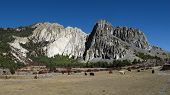 Grazing yaks and limestone formation