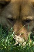 Dog With Toad
