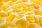 corn flakes and milk as background texture