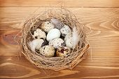 Quail eggs nest over wooden table background