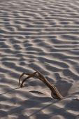 Branch In Desert